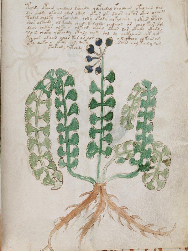 Voynich172 - cropped