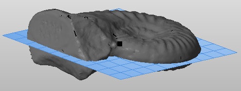 Sliced 3D Fossil