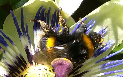 Bee covered in pollen with pixel watermark