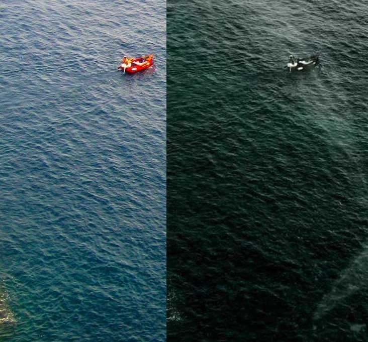 Two images next to each other. The one with a whale is an obvious copy of the original.