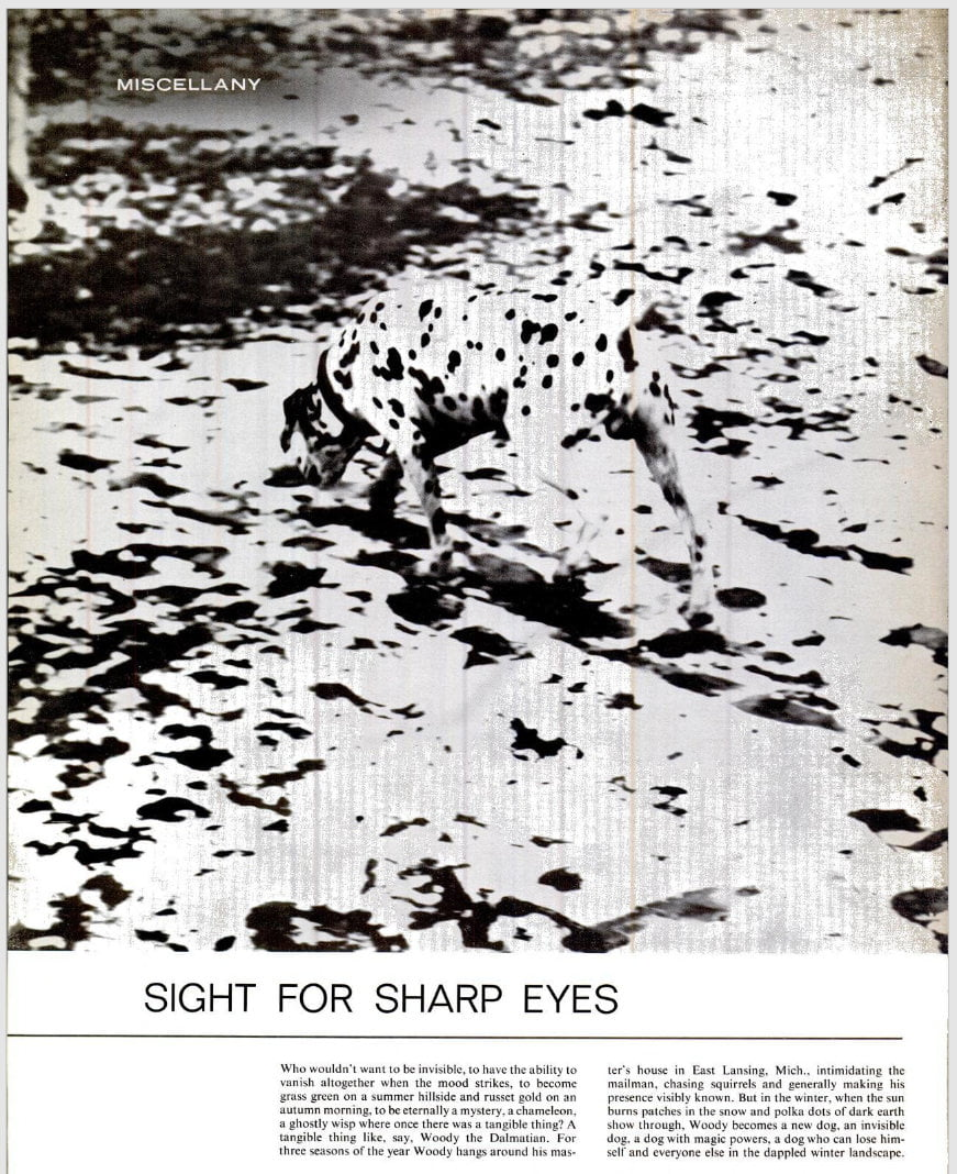 A page from a magazine. The photo of the dog is clear.